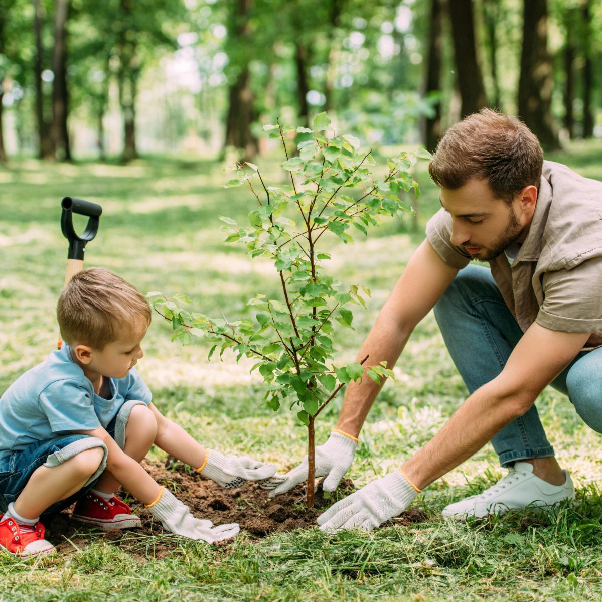 садимо дерева картинки